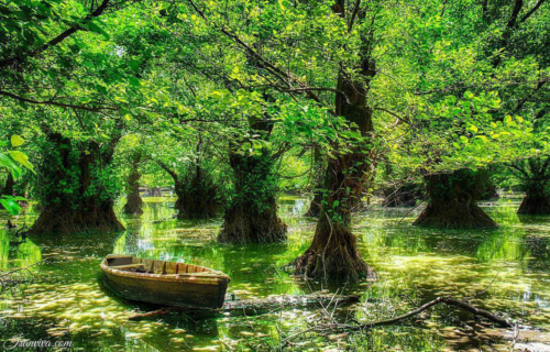 Estil Wetland in Gilan Province - Best Photos Of Iran - Iranviva