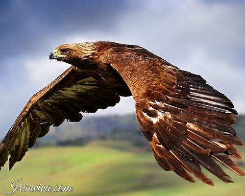 Golden Eagle - Iran Tours & Travel