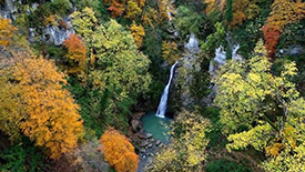 Fall in Hyrcanian Forest - Best Cultural & Adventure Tours - Iranviva