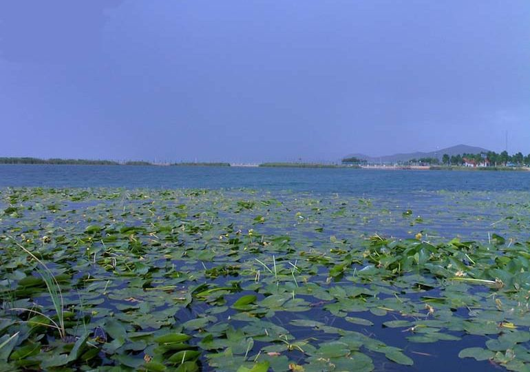 Lotus water, a mirage that is not a mirage!